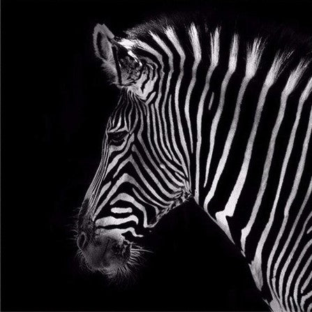 Classic Zebra - Animals Paint By Numbers