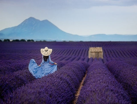 Woman in Lavender Field  - People Paint By Numbers