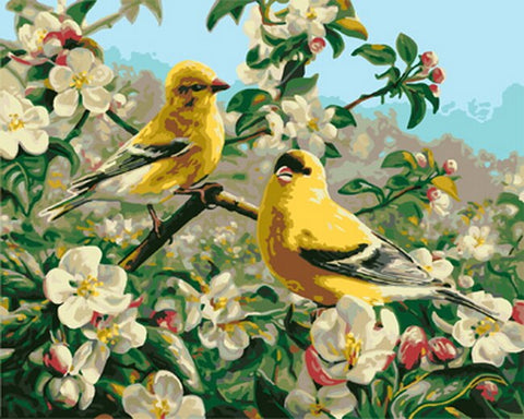 Goldfinch Bird - Birds Paint By Numbers