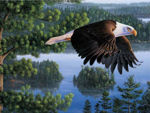 Bald Eagle - Birds Paint By Numbers