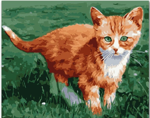 Little Orange Cat - Animals Paint By Numbers