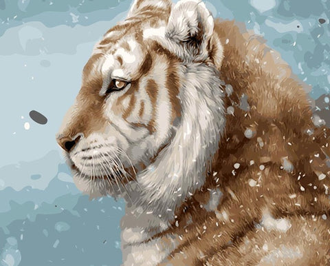 Snow Tiger  - Animals Paint By Numbers