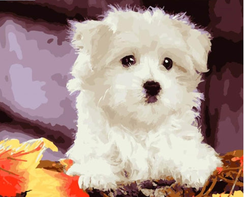 Dog Kits Animals - DIY Paint By Numbers - Numeral Paint