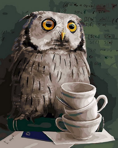 Owl Studied - Birds Paint By Numbers
