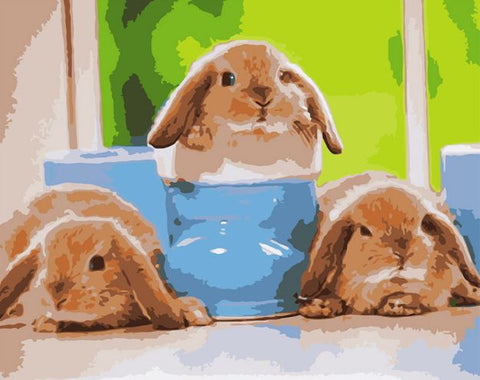 Baby Rabbits - Animals Paint By Numbers