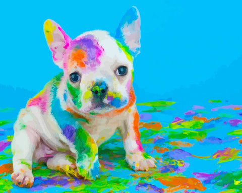 Pigment Dog  - Animals Paint By Numbers