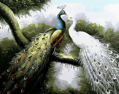 Peacock Couple - Birds Paint By Numbers