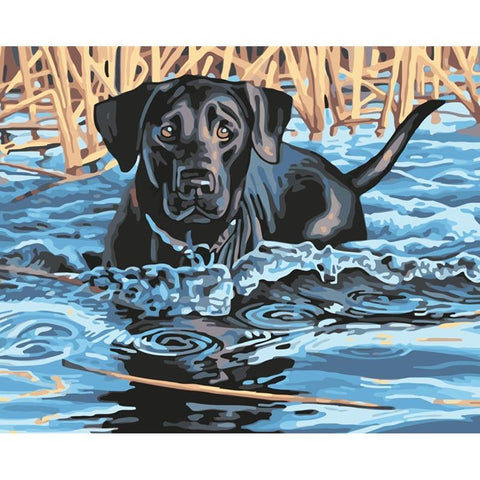 Black Dog Swimming - Animals Paint By Numbers