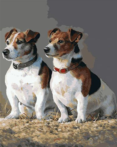Jack Russell Dogs- Animals Paint By Numbers