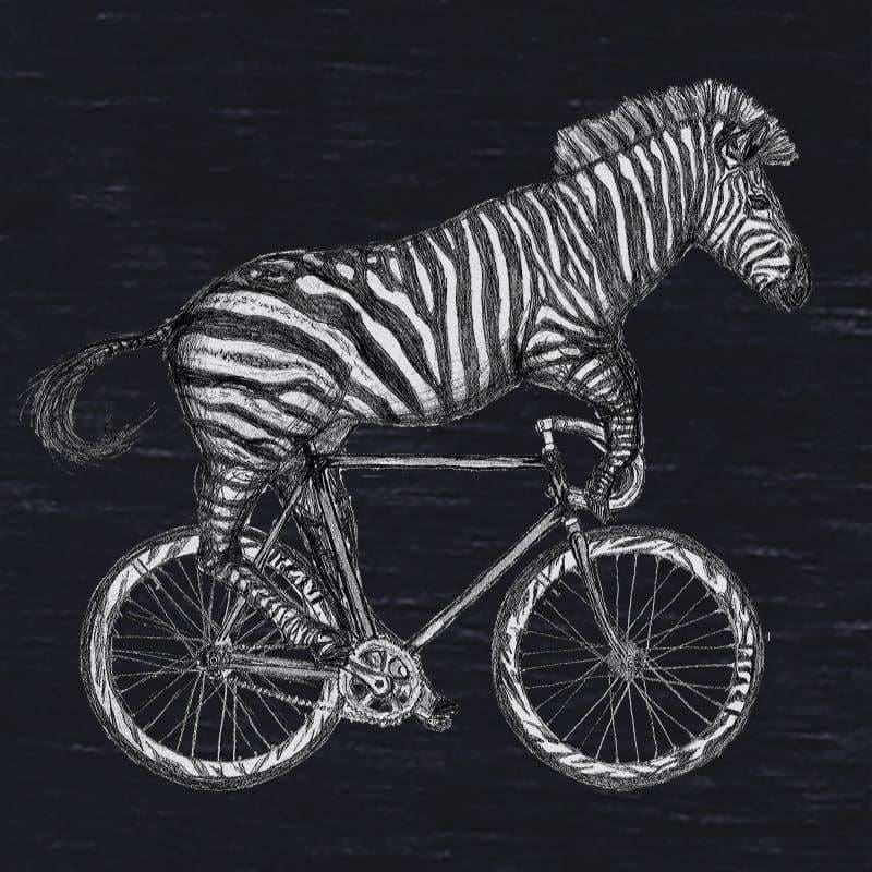 Zebra on a Bicycle Womens T-Shirt - Womens / S / Black - Unisex Tees