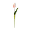 Pink Real Mini Tulip Stem