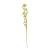 Allium Stem, green