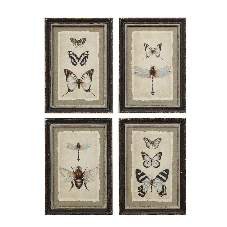 Framed Insect/Butterfly Print