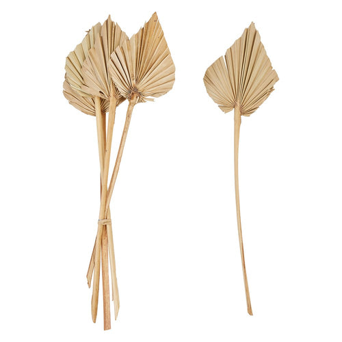 Dried Natural Palm Bunch, pointed
