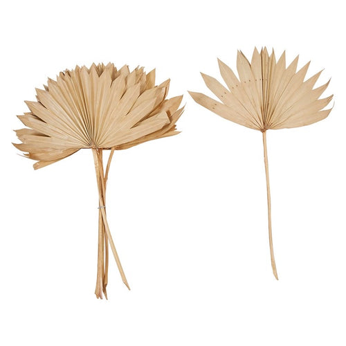 Dried Natural Palm Bunch, wide fan