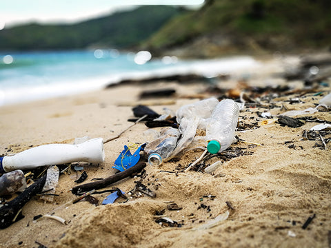 Spring Break: Plastic Pollution and Solutions