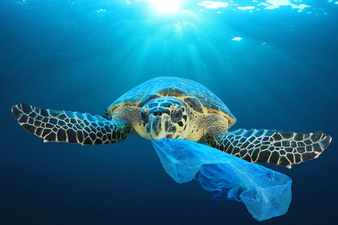 organizations that help remove ocean plastic
