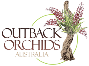 Outback Orchids