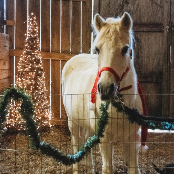 Santa Clause is Coming to the Farm!         Mini Photo Sessions November 23, 2019