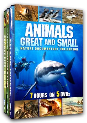 Animals Great and Small - Nature Documentary Collection
