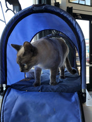 taking your cat for a stroll in pet stroller