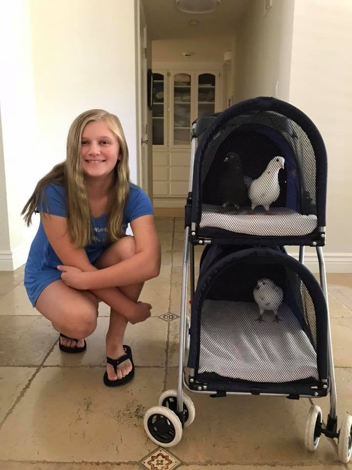 Double Decker Pet/Pigeon Stroller