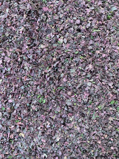 Organic Dulse Flakes
