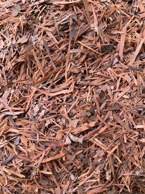 Wild Harvested Pau d'Arco Bark