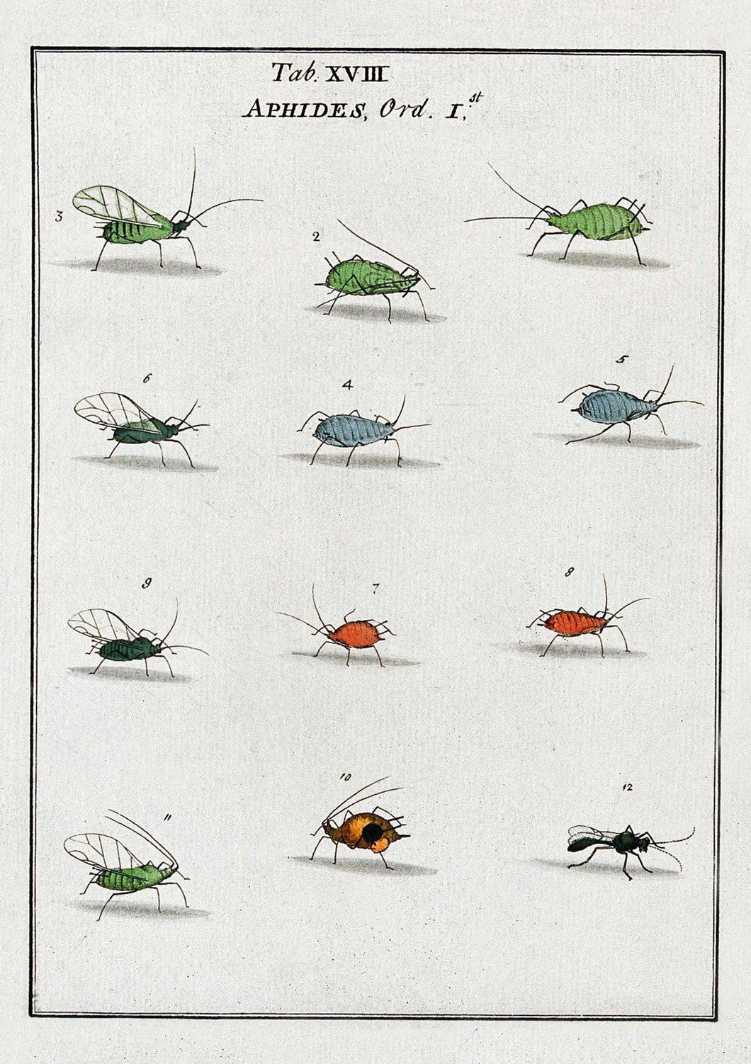 The Pattern Book Aphids