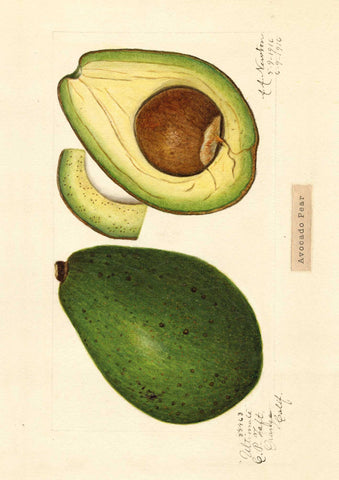 The Pattern Book Avocado