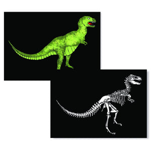 Cartes D'Art T-Rex X-Ray 3D Postcard