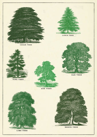 Trees Card