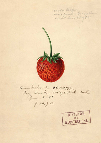 The Pattern Book Strawberry