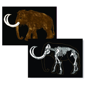 Cartes D'Art Wooly Mammoth X-Ray 3D Postcard