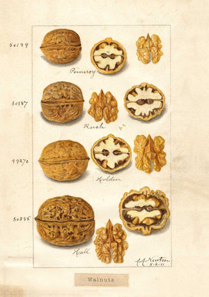 The Pattern Book Walnuts