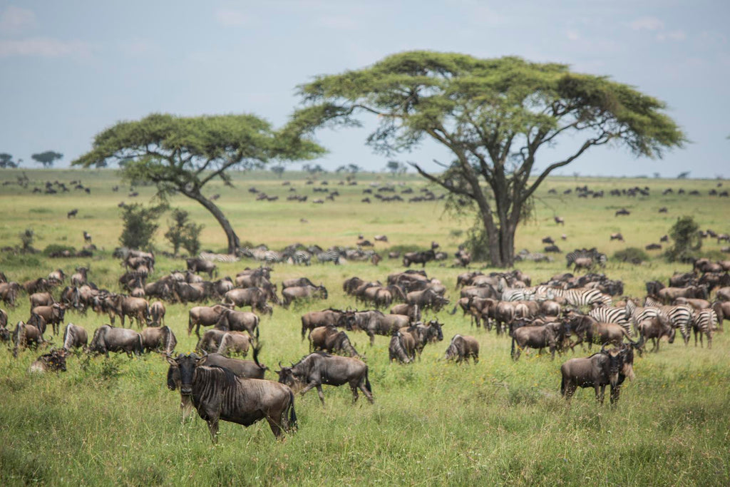 Grazing animals help to support a functioning ecosystem