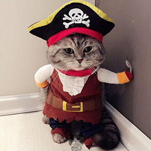 Pirate Costume for Cats: Pet Pirate Costume for Cats and Small Dogs - Sizes S-XL Available.