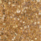 8C-195 - 8/0 Cut 24kt Gold Lined Crystal (Like DB 33) Miyuki Seed Bead | 25 Grams