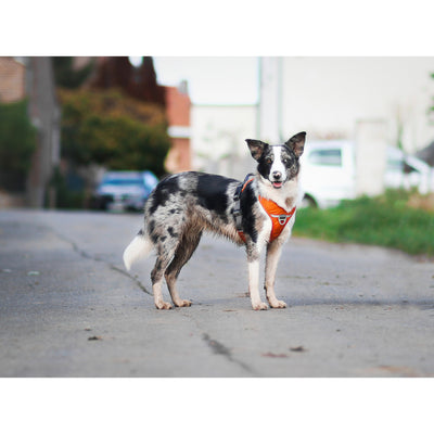 DOG Copenhagen Hundesele - Comfort Walk Pro - str. M - Orange