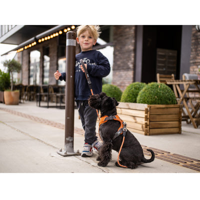 Comfort Walk Pro hundesele fra Dog Copenhagen på hund small orange