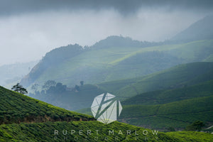 Looking across Munnar's tea plantation, with a misty cloud in the morning. The sunlight is shining on the rolling hills, casting shadow on the others.  The trees are almost shulouetted against the background. The tea plantation is beautiful. Shot in Munnar, India by Rupert Marlow fine art documentary photographer in 2016
