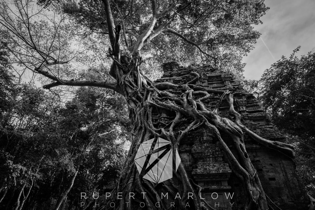 A wide-angle black and white, monochrome photograph of a temple in Cambodia, wrapped by the roots of a vine tree. Shot in Cambodia by Rupert Marlow fine art documentary photographer in 2018