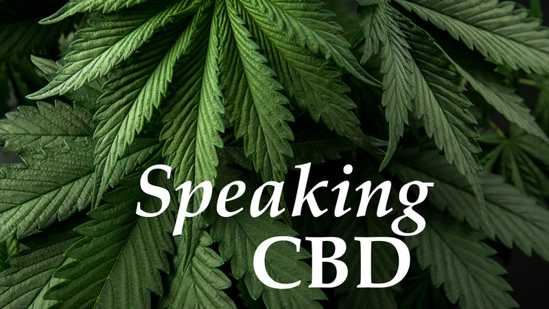 Hemp Seed Oil vs. Hemp Oil?  Full Spectrum, Broad Spectrum, or Isolate? CBD Industry Buzz Words: What do they mean?