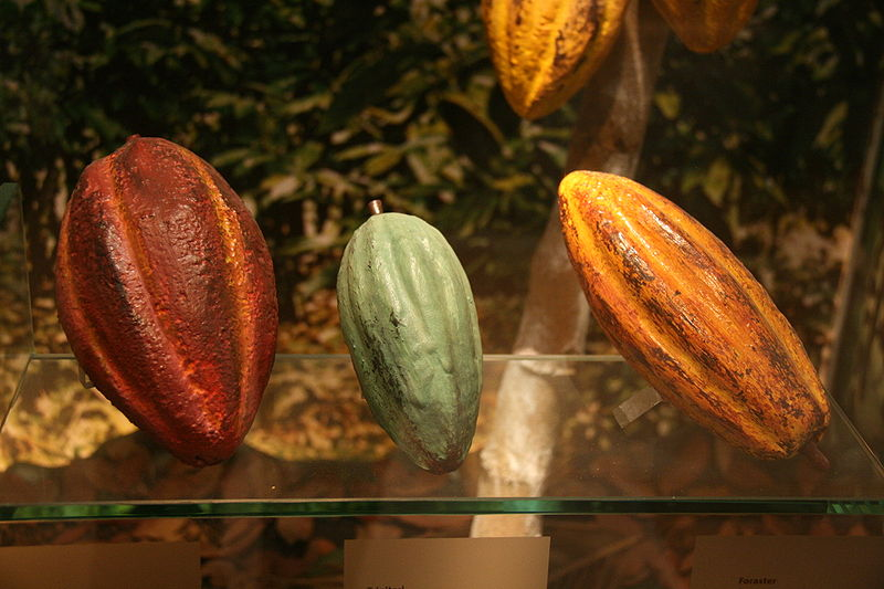 How Cacao (and Chocolate) Gets Its Flavor