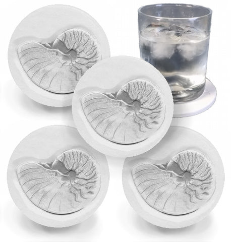 Nautilus Shell Drink Coasters