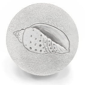 Junonia Shell Drink Coasters
