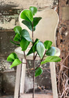 Faux Fiddle Leaf Fig Spray