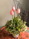 The Alana Potted Tulip Cottage Spring Centerpiece