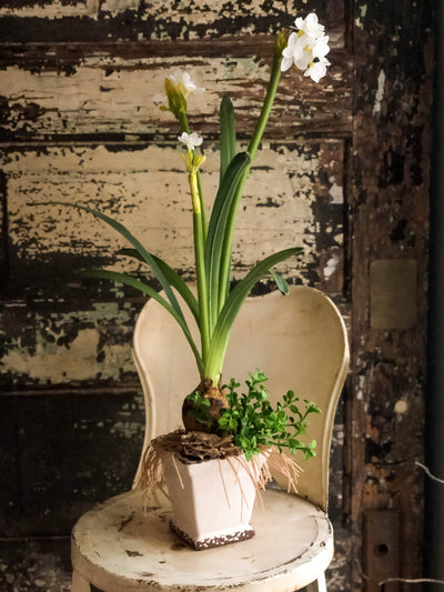 The Narcissus Spring Arrangement, Easter arrangement, spring decor, paper white centerpiece, cottage decor, garden floral, daffodil
