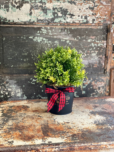 Tea Leaf Topiary Pot, Farm Fresh Round Tin Christmas Planter, Christmas greenery, Farmhouse christmas planter, farmhouse greenery
